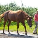 Personne en fauteuil roulant et un cheval