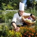 Chef cueillant des plantes comestibles