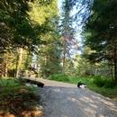 Passerelle en bois - Oméga la Nuit