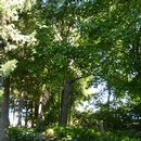 Partie des jardins accessible