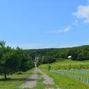 Chemin d'accès au vignoble
